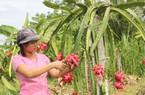 Trái cây Thái tràn thị trường Việt: Kiến nghị tăng tần suất kiểm tra