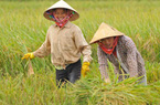 """Giải báo chí quốc gia 2015: """"Được mùa"""" các tác phẩm về tam nông"""