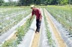 Đà Nẵng: Giải ngân gần 4 tỷ đồng Quỹ Hỗ trợ nông dân