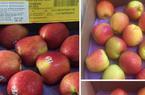 Nghi ngại táo Mỹ giá chỉ 44.000 đồng/kg