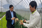 Hỗ trợ để nông dân Việt Nam sớm làm giỏi như nông dân Nhật Bản