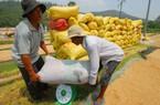 Giá lúa giảm nhẹ, nông dân thu đến đâu bán hết veo đến đó