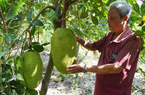 Trồng cây ăn trái, nông dân dễ thoát nghèo