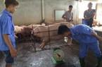 """Hội ND Việt Nam: """"Ứng cứu"""" nông dân nuôi lợn là hành động cấp thiết"""