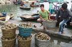 """Trực tuyến """"Phát triển kinh tế thủy sản theo hướng bền vững"""""""