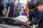 Xuất khẩu cá ngừ đại dương đạt nửa tỷ USD/năm