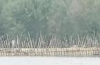 Quảng Ngãi: Đầu tư 170 tỷ đồng xây dựng đập ngăn mặn lớn nhất tỉnh