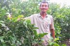 """Khấm khá nhờ cách trồng """"lung tung"""" các giống cây trong cùng 1 vườn"""