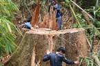 Tàn sát rừng ở Quảng Nam: Ai bảo kê cho lâm tặc?