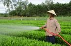 Xây dựng nông thôn mới: Cây keo, con bò đưa Quế An (Quảng Nam) đi lên