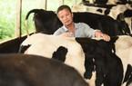 Thứ trưởng Hà Lan thăm vùng chăn nuôi bò sữa tại Việt Nam
