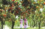Đất đai trù phú, Đông Nam Bộ tận dụng phát triển du lịchnông nghiệp