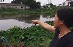 Dịch tả lợn châu Phi ở Hưng Yên: Lợn chết vẫn trôi nổi khắp kênh