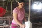 Làm giàu ở nông thôn: Người đàn bà dựng cơ đồ với ngàn con thỏ