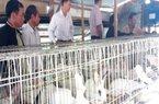Lạ mà hay: Mỗi tháng thu 35-40 triệu đồng nhờ cho thỏ ăn lá vông