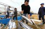 Phạt đến 1 tỷ đồng cho hành vi khai thác thủy sản trái phép