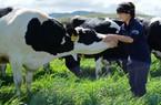 Thị trường rộng mở cho ngành chế biến sữa