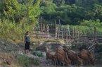 Nghệ An: Cuộc sống đổi thay của hộ nghèo dân tộc thiểu số miền núi