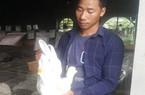 Ninh Bình: Bỏ lái xe về quê nuôi thỏ, lãi 20 triệu đồng mỗi tháng