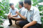 """Đông Nam Bộ """"rộ"""" nghề trồng dưa lưới, lợi nhuận gấp 10 lần cao su"""