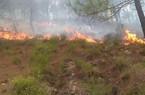 Hà Tĩnh: Cháy ngùn ngụt trên đồi thông trồng lâu năm