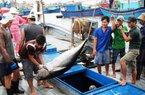 Cá ngừ Việt 37 triệu, cá ngừ Nhật 70 tỷ, không nỗ lực mất thị trường