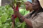 Người phụ nữ kiếm tiền tỉ nhờ trồng rau thủy canh ở Zimbabwe
