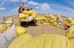 """Các Bộ """"trống đánh xuôi, kèn thổi ngược"""", DN xuất khẩu gạo thiệt hại"""