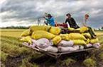 30.000 tỷ đồng cho vay nông nghiệp, nông thôn