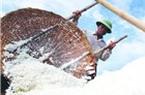 Lại cho nhập  102.000 tấn muối