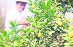 Kênh tài chính hỗ trợ đắc lực nông dân