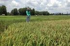Huyện Đức Hòa (Long An): Băm nát đất lúa