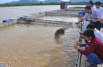 Phú Thọ: Nuôi cá lồng, bè thu   tiền tỷ