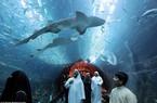 Vào trung tâm thương mại để… tập bắn, xem cá mập