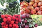 Nhãn tím, xoài đỏ, cà chua đen giá cao vẫn đắt khách