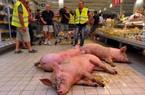 LẠ: Lùa lợn vào siêu thị để... biểu tình