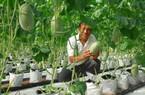 """Những """"hạt giống"""" nông sản sạch"""