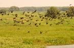 """Hoang sơ """"vũ điệu ngày hè"""" ở Vườn quốc gia Tràm Chim"""
