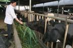 Ngăn nhập sữa để cứu nông dân?