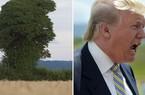 Kỳ lạ cây mọc tự nhiên giống hệt Donald Trump