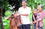 Vào nhóm cải thiện sinh kế có bò và vốn làm ăn