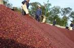 Không bán Vinacafe Biên Hoà, Tổng công ty cà phê Việt Nam có thể lỗ khủng