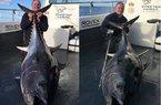 """Anh: Câu được cá ngừ """"khủng"""" kỉ lục, nặng 2 tạ dài 2m"""