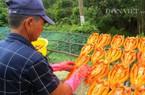 Cầu kì chọn nguyên liệu làm khô cá ở làng nghề lâu đời nhất miền Tây