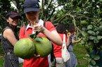 """Làm giàu từ nông thôn: Khi du lịch """"bắt tay"""" với tiêu thụ nông sản"""