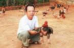 Mới 2 năm học nuôi gà Đông Tảo đã lãi ngay 200 triệu đồng