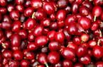 Giá nông sản hôm nay 18/7: Thị trường im ắng, giá cà phê tiếp tục giảm, giá tiêu ít dao động