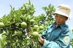 Việt Nam xuất khẩu giùm Thái Lan cả tỷ USD trái cây sang Trung Quốc