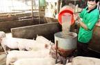 Lo ngại đầu cơ thịt lợn, Phó Thủ tướng yêu cầu bình ổn thị trường
