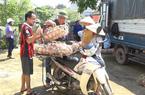 Quảng Ninh: Hội ND trao 150 con lợn giống cho hộ nghèo Ba Chẽ